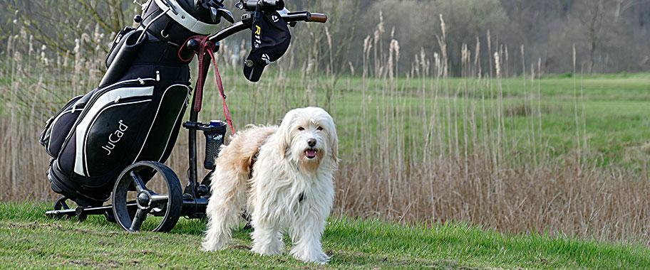 george-bei-golfbegleithundpr-fung-2016-912x380-px_orig